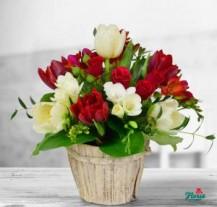 Flori pentru 1 martie